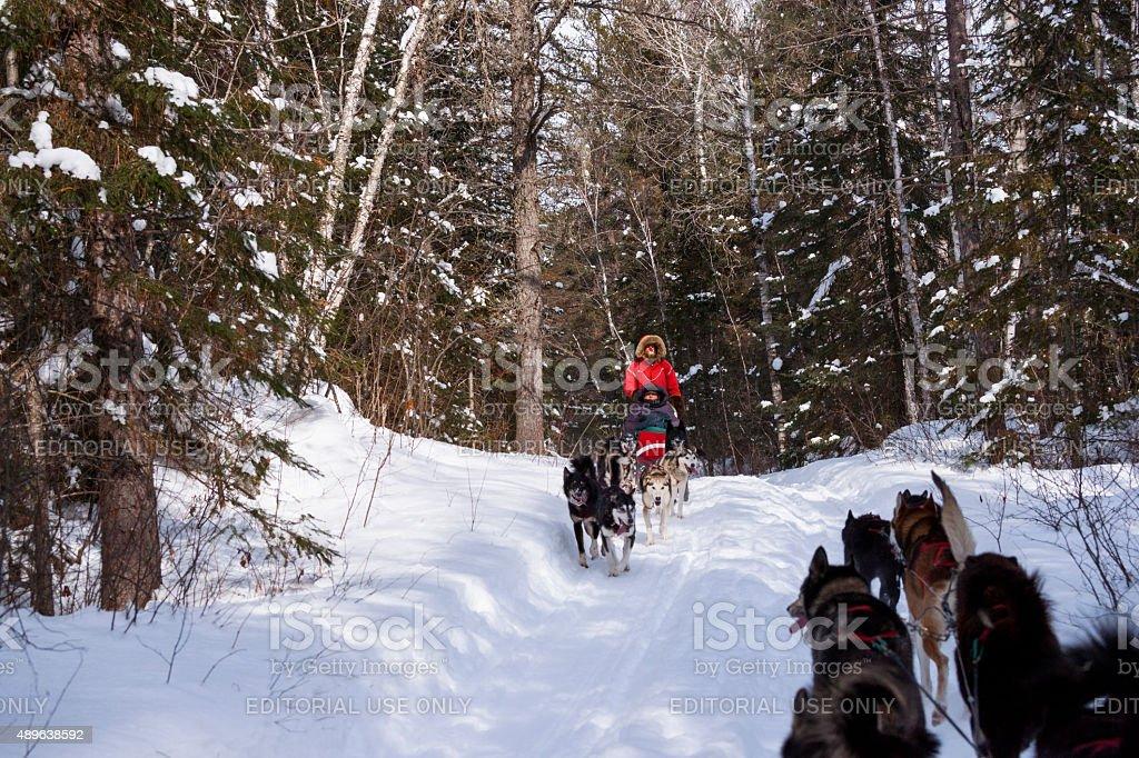 Passing dog sleds stock photo