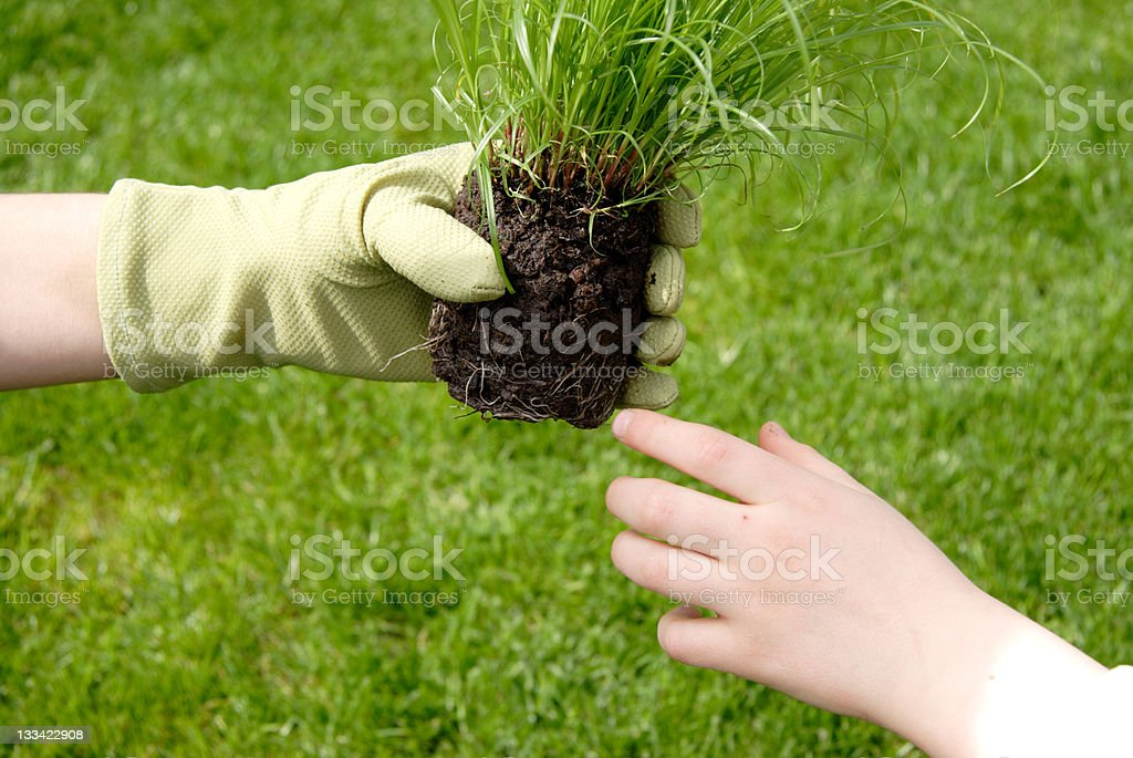 passing on nature royalty-free stock photo