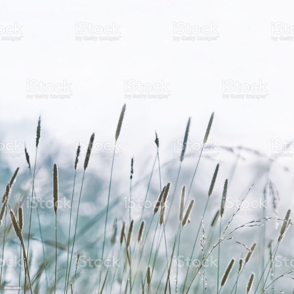 Pastel Blurred Herb Nature Background stock photo