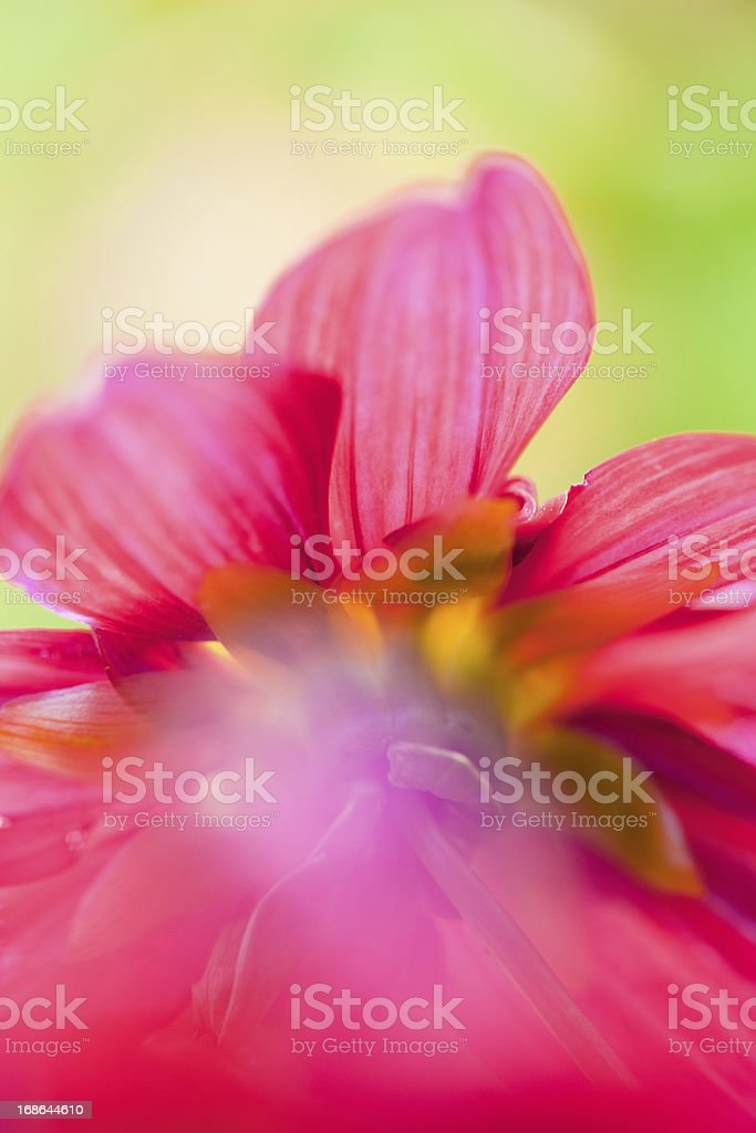 Pastel Colored Flower stock photo