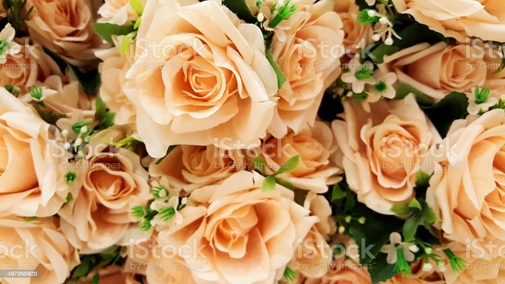 Pastel Peach Color Roses stock photo