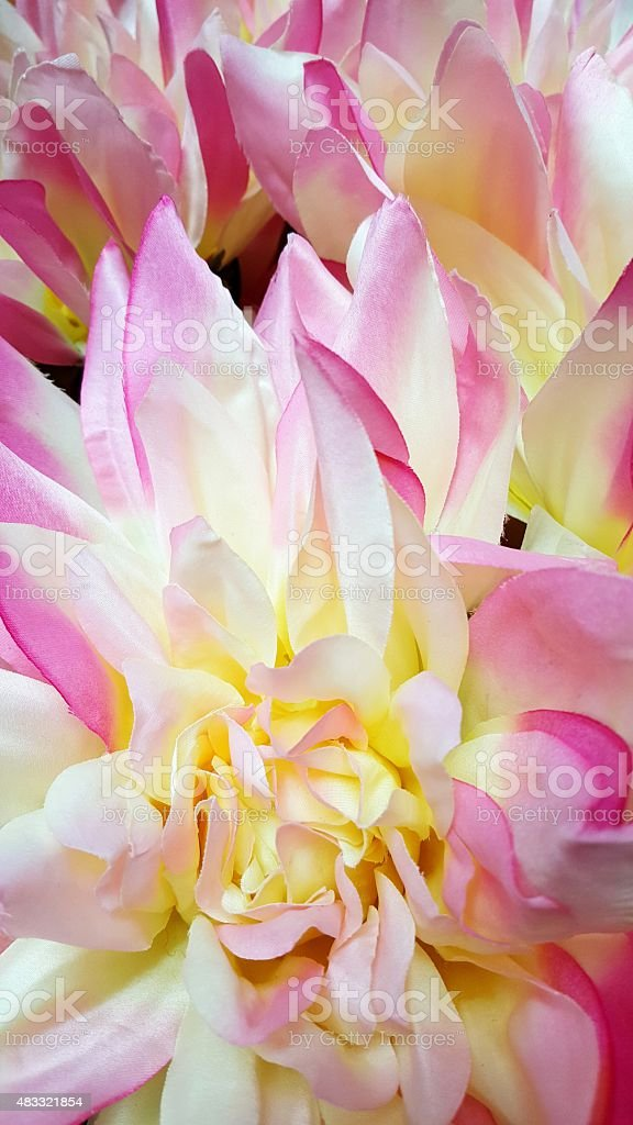 Pastel Pink and Yellow Flowers stock photo