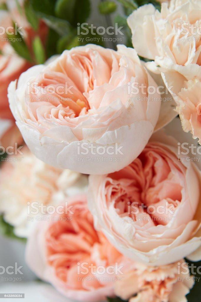 pastel pink roses stock photo