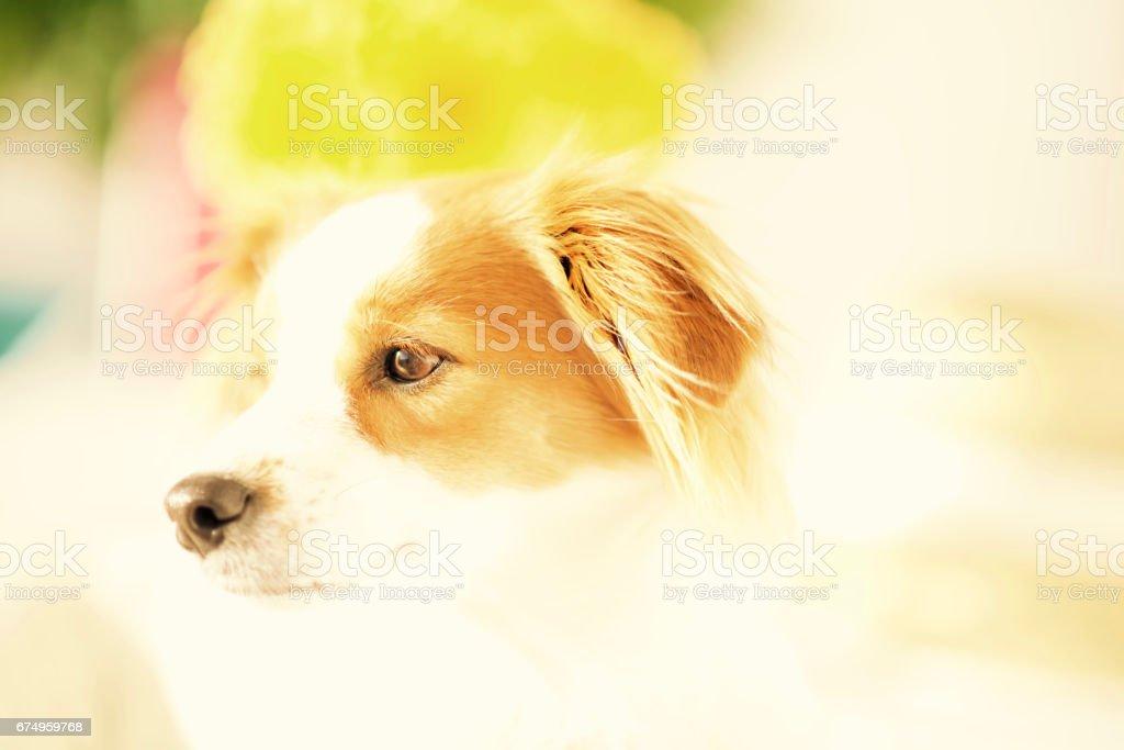 Pastel Puppy Dog. stock photo
