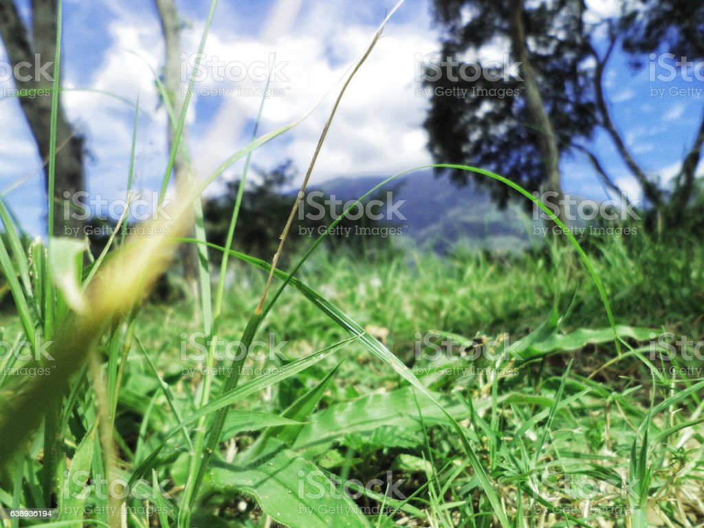 Pasto y arboles stock photo