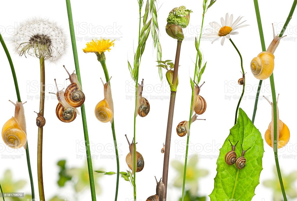Pastoral composition of flowers and Garden snails and Mediterranean snails stock photo