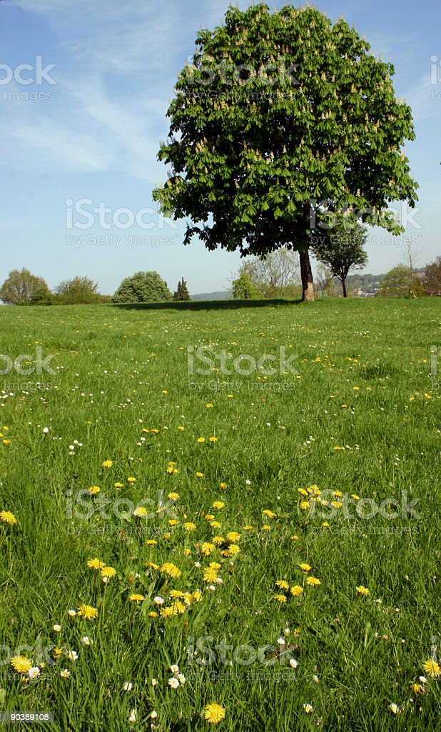 Pastoral landscape royalty-free stock photo