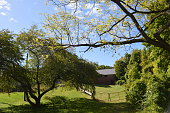 Pastoral setting with trees and old fence
