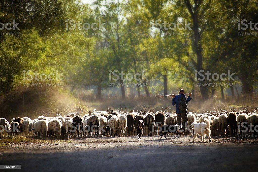 Pastorizia stock photo