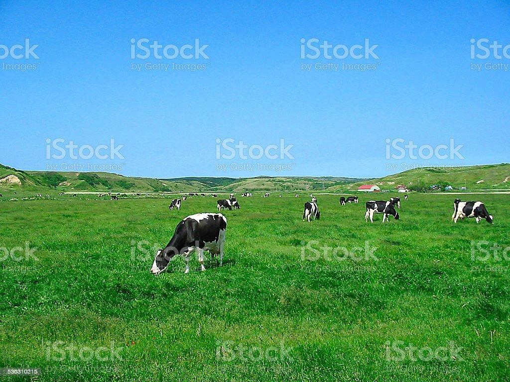 Pasturage stock photo
