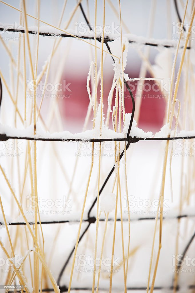 Pasture Fence In Winter Snow with Red Barn stock photo