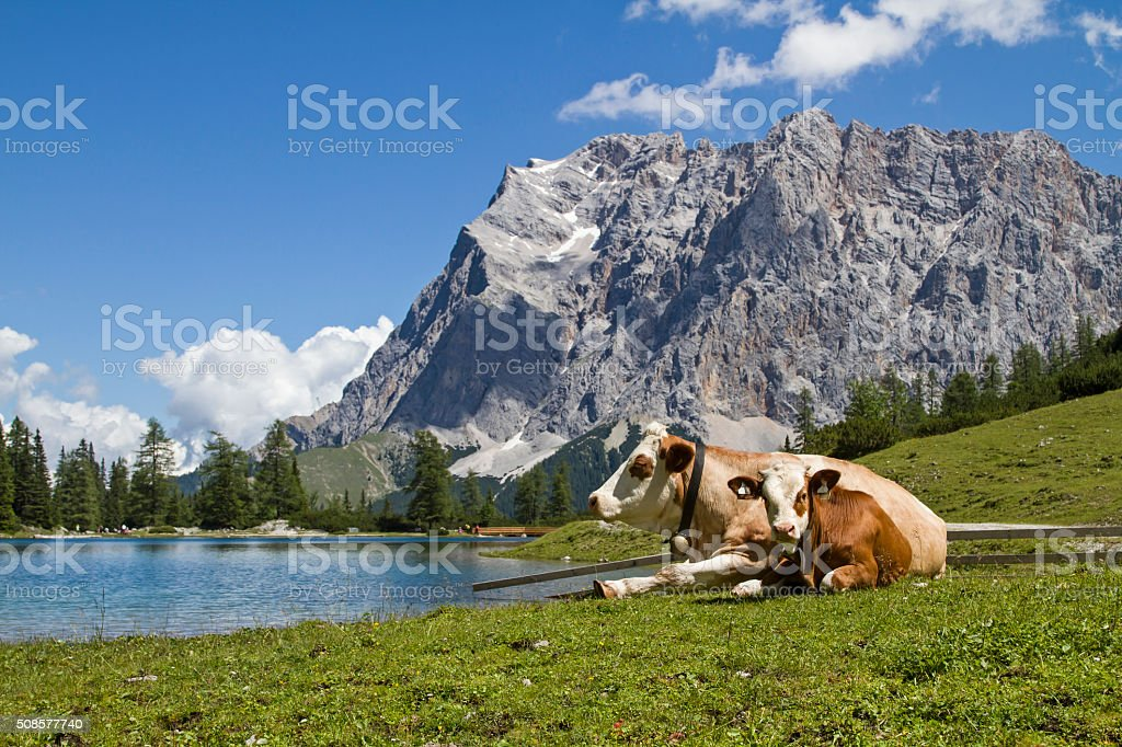 Pasture idyll on Seeebensee lake stock photo