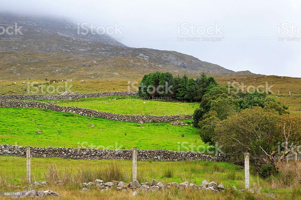 Pasture in the National park Connemara. stock photo
