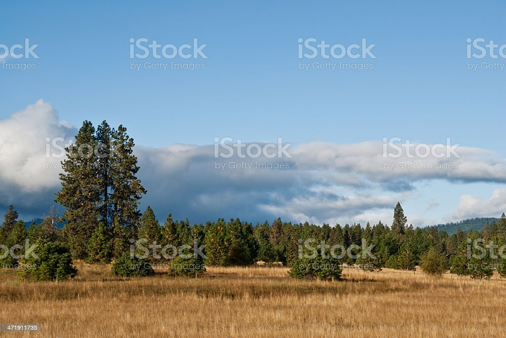 Pasture Land and Forest in the Morning Light royalty-free stock photo
