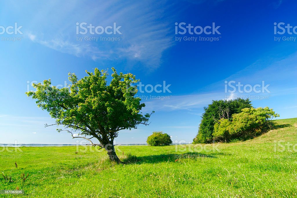 Pasture royalty-free stock photo