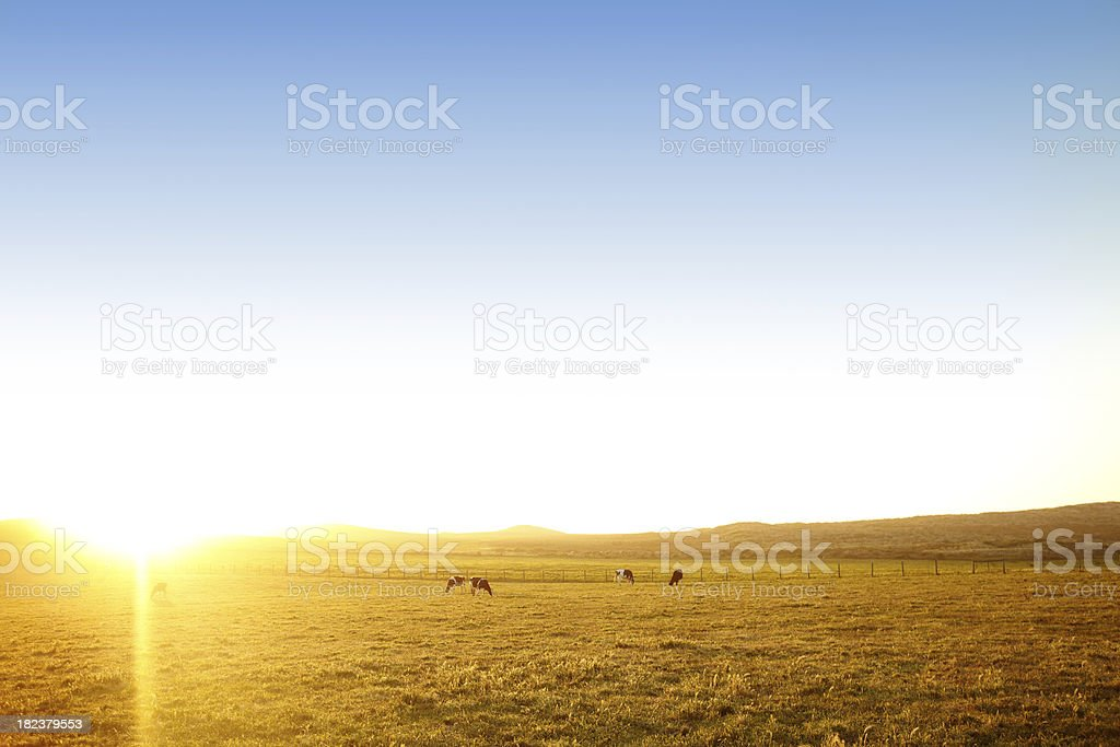 Pasture with Cows royalty-free stock photo
