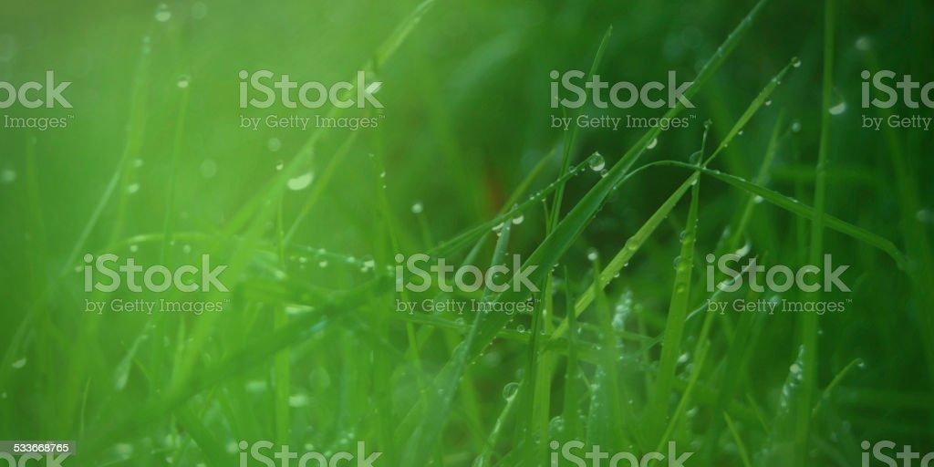 Pâturages vert photo libre de droits