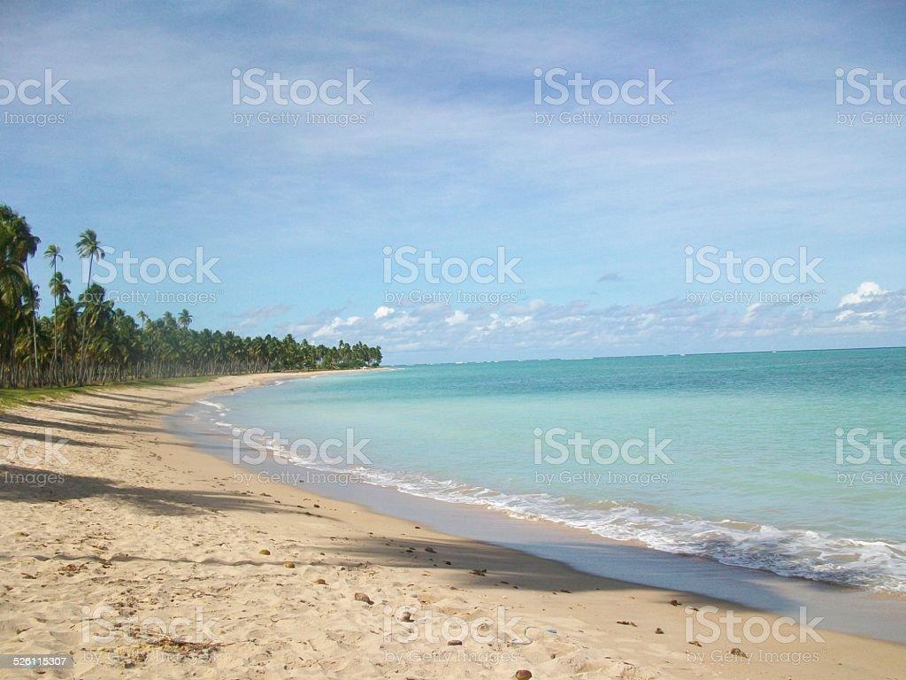 Patacho beach, Alagoas, Brasil foto de stock libre de derechos
