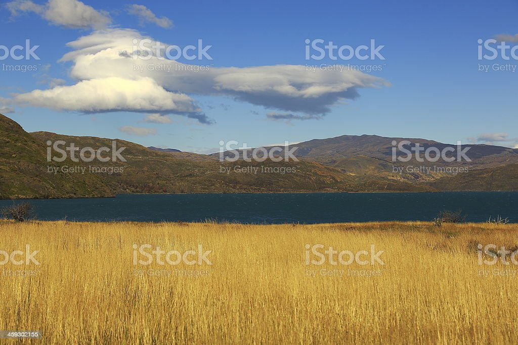 Patagonia field in Torres Del Paine National Park - Chile stock photo