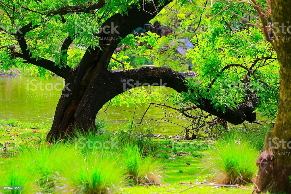 Patagonia landscape: Deciduous tree, pampa meadow, green woodland stock photo