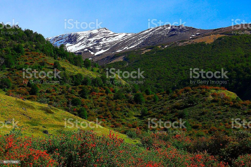 Patagonia mountains, red wildflowers, pampa steppe landscape, Calafate, Argentina stock photo