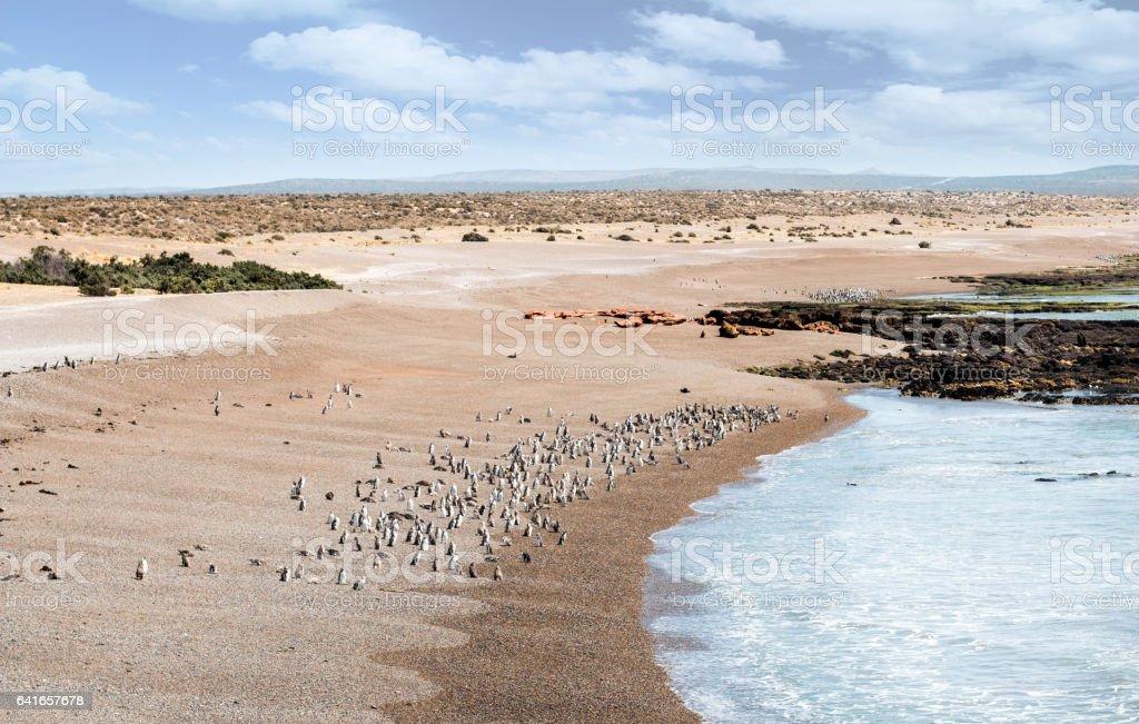 Patagonia - Punta Tombo view with Magellano's Penguin stock photo