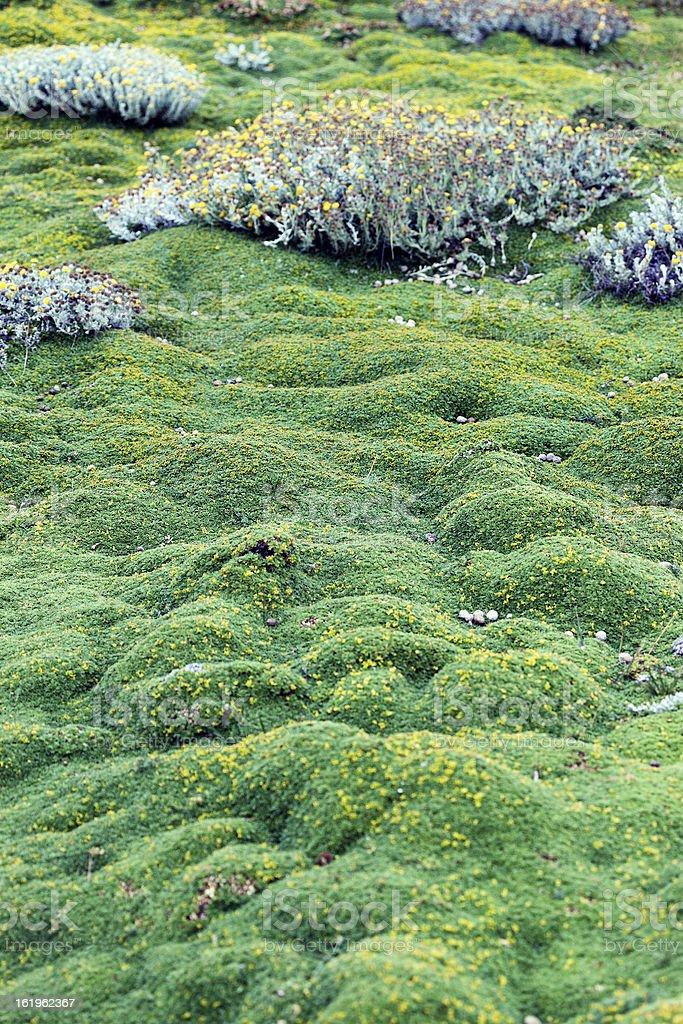 Patagonian moss royalty-free stock photo