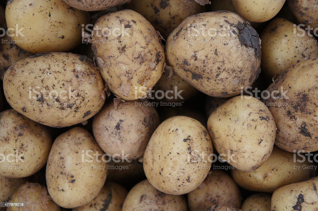 Patatoes stock photo