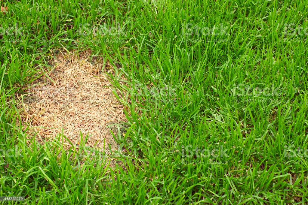 Patch of dead grass stock photo