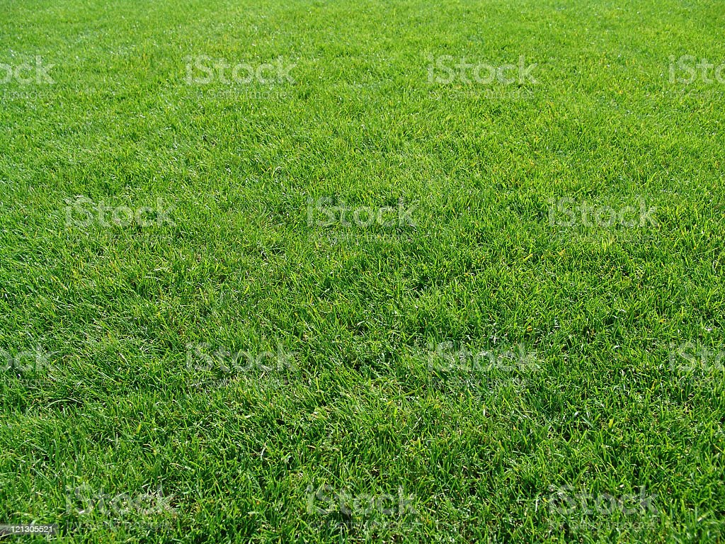 A patch of green grass during the day royalty-free stock photo