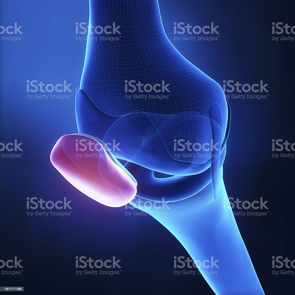 Patella anatomy stock photo