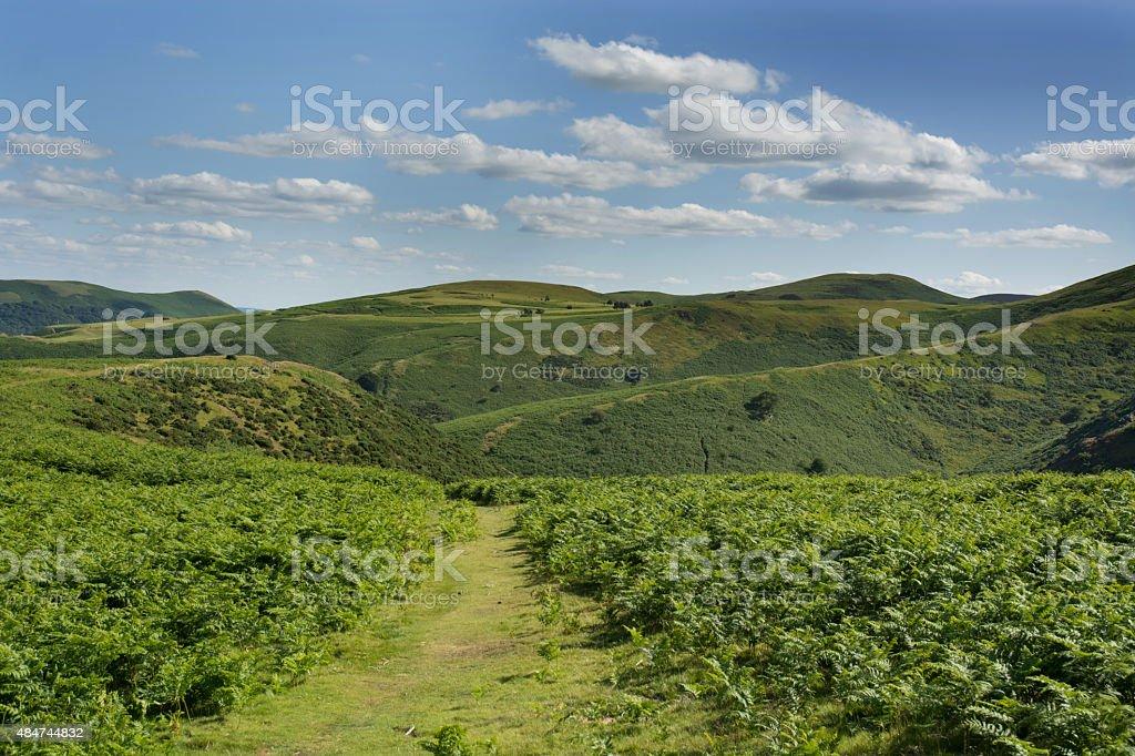 path across moorland stock photo