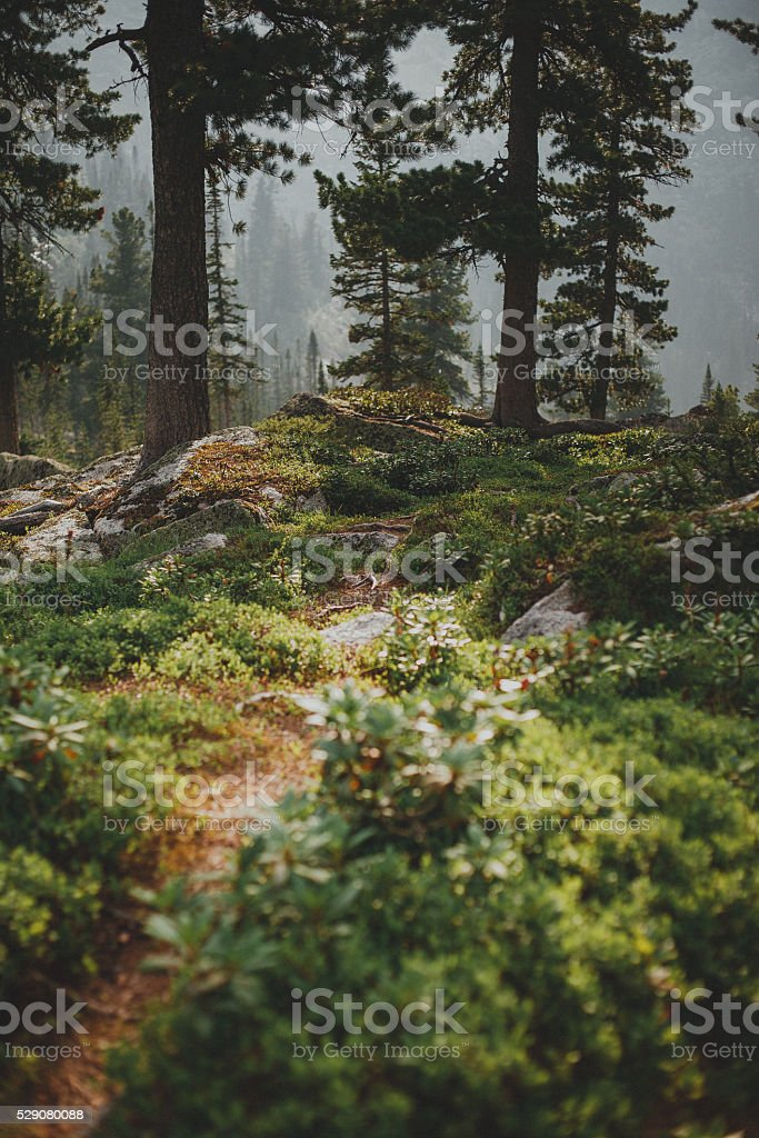 Path among rocks foreground. Dawn mountain forest summer stock photo