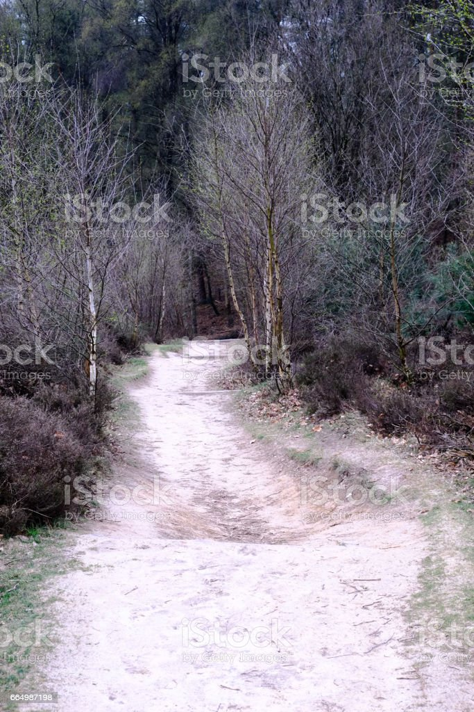 Path and trees at the Posbank in Rheden, National park Veluwe, Netherlands stock photo