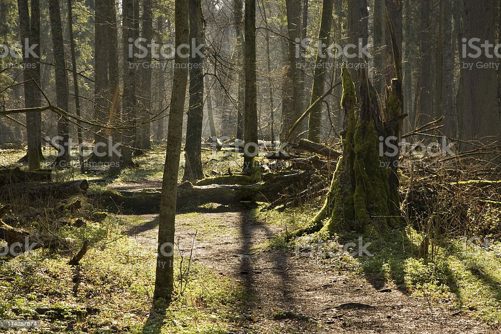 Path at springtime natural forest stock photo