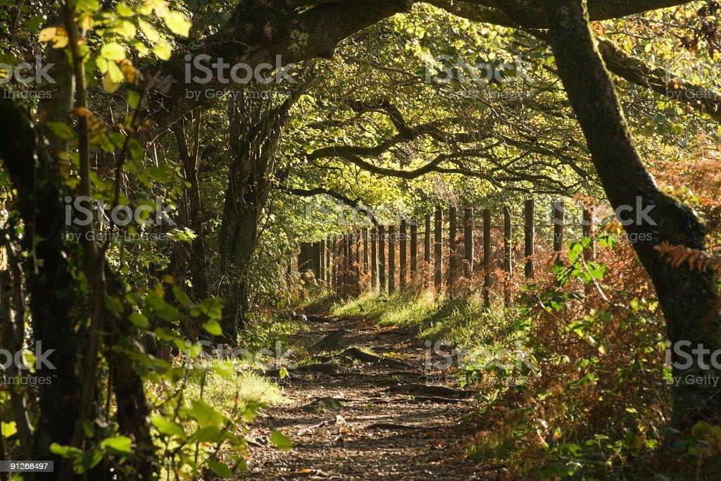 Path beside river Dart at Two Bridges on Dartmoor stock photo