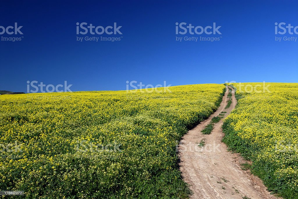 Path between flowers royalty-free stock photo