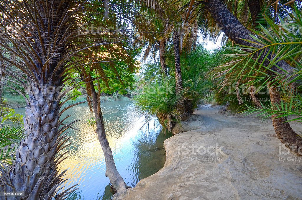 Path between river and palm forest at Preveli. stock photo