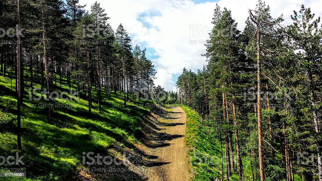 Path between trees royalty-free stock photo