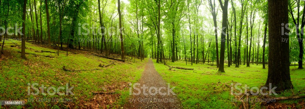 Path deep in the woods stock photo