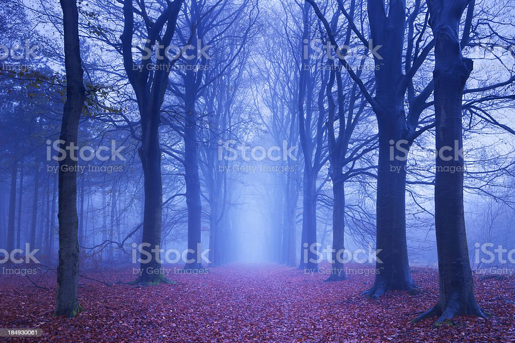 Path in a dark and foggy forest in The Netherlands royalty-free stock photo