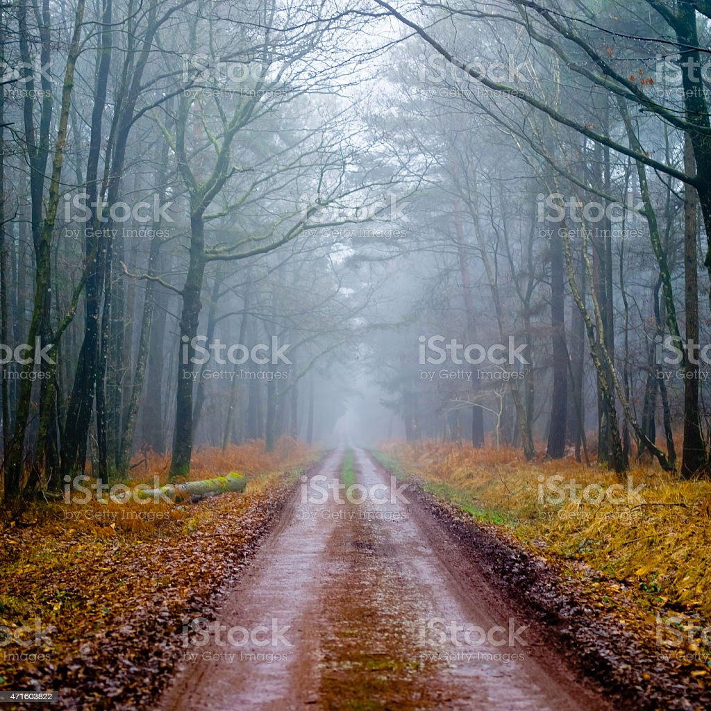 Path in a foggy forest stock photo