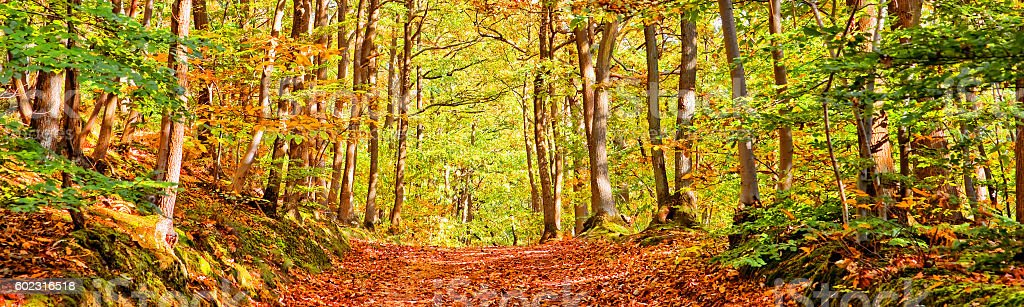 Path in a forest on a sunny autumn day, panorama stock photo