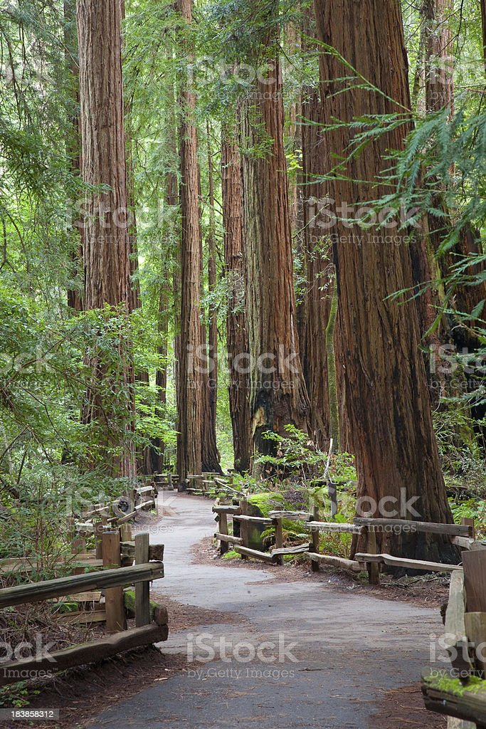 Path in a forest stock photo