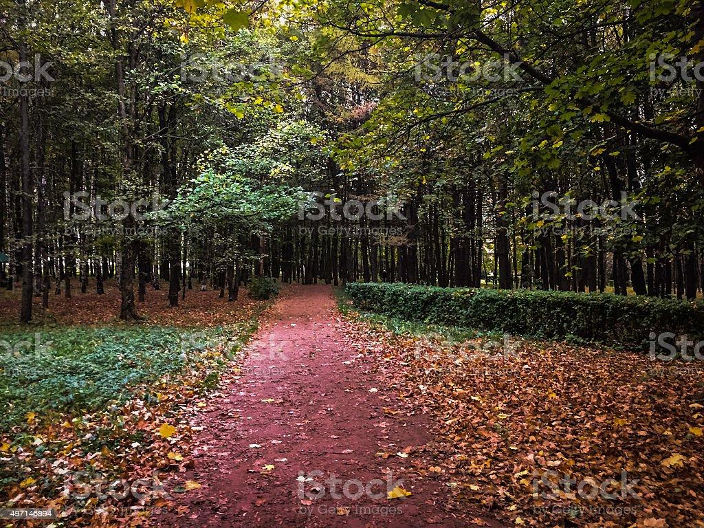 Sentier dans le parc photo libre de droits