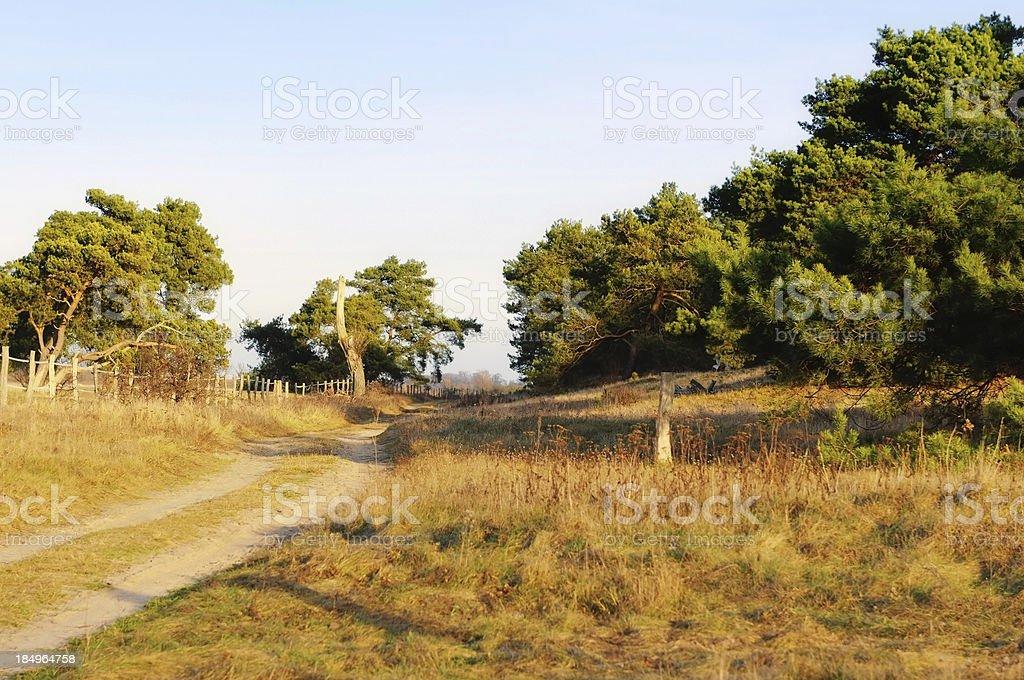 path in a typical brandenburg pine tree landscape stock photo
