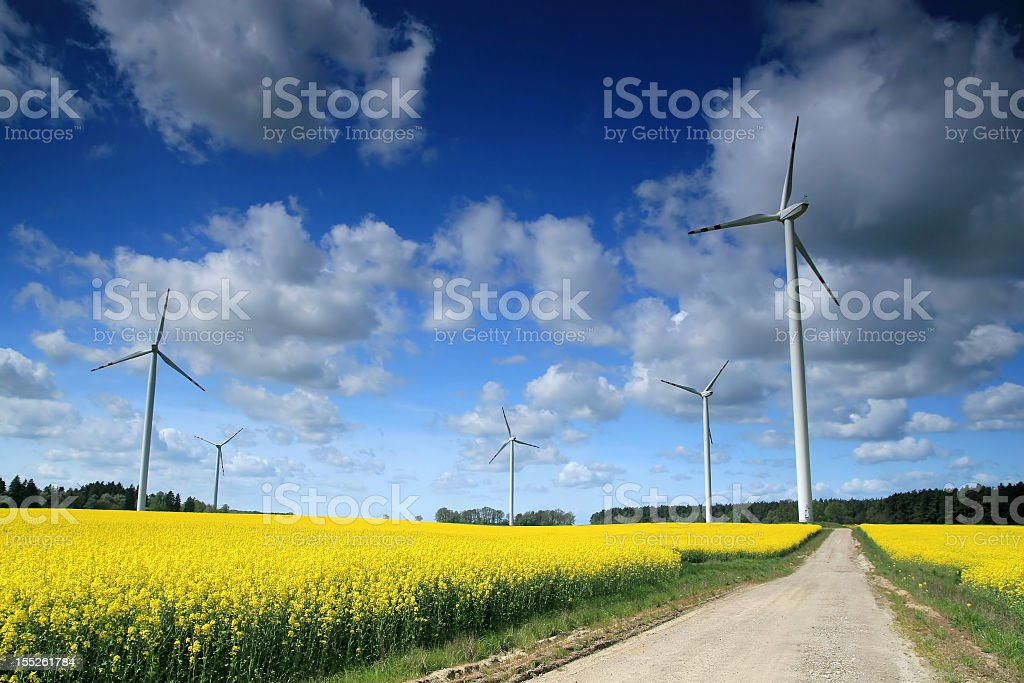 Path in a windmill farm with yellow flowers stock photo