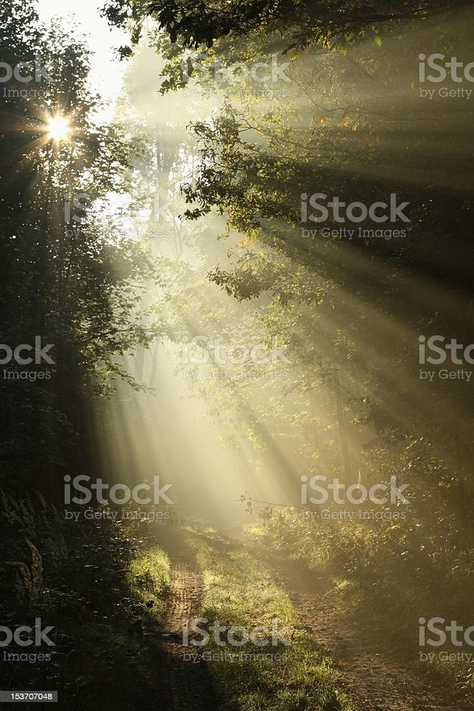 Path in autumn forest illuminated by the morning sun royalty-free stock photo