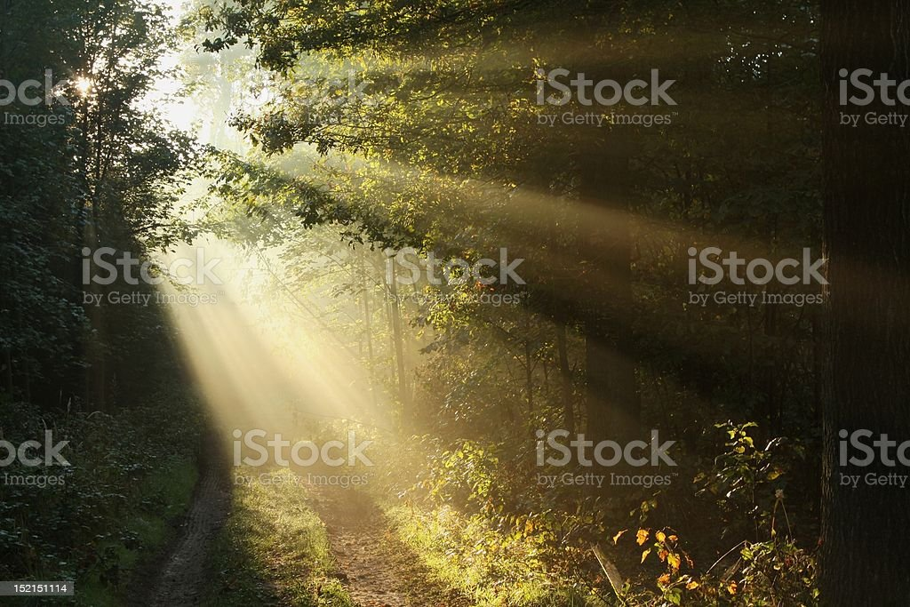 Path in autumn forest on a foggy morning royalty-free stock photo