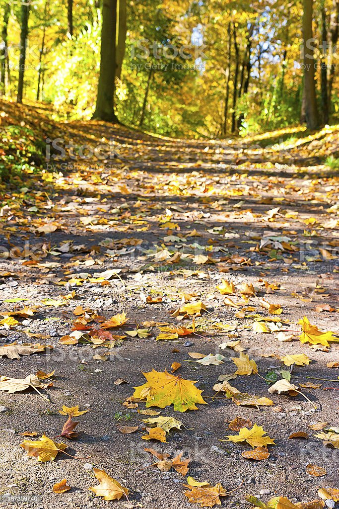 Path in autumn forest royalty-free stock photo